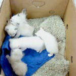 Picture of a box of kittens