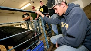 Photo of students with livestock in an Agriculture building on the NIACC campus