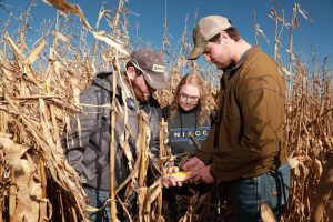 Picture of Ag students in corn field